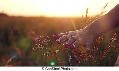 femme, nature, paille, herbe, jeune, lumière soleil, main, champ, toucher, femme, apprécier