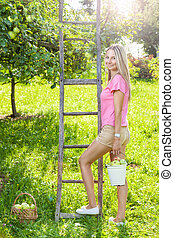 femme, pomme, échelle, arbre, jeune, pommes, cueillette