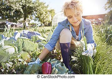 femme, prendre, légumes, depuis, les, champ