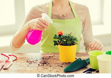 femme, pulvérisation, pot, haut, roses, mains, fin