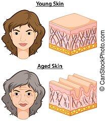 femme, vieilli, jeune, peau