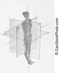 femmes, avions, détail, anatomique