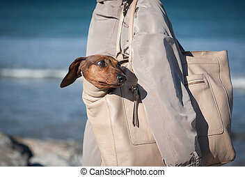 femmes, marche, à, chien basset allemand