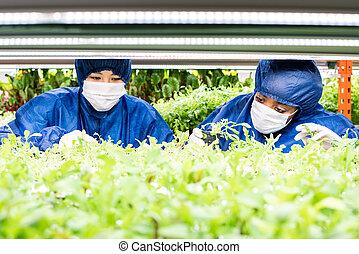 femmes, sorts, horticole, nouveau, fonctionnement, usines, seedlings, deux, vert