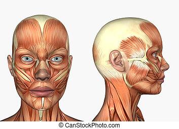 femmina, testa, con, muscoli