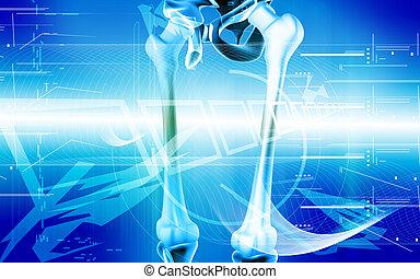 Femur - Digital illustration of femur in colour background...