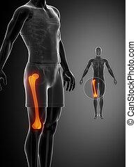 femur, x--ray, pretas, varredura osso