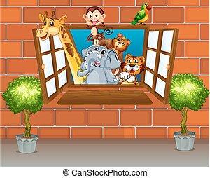 fenêtre, animaux, zoo