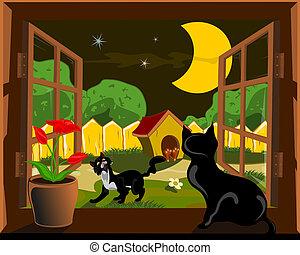 fenêtre, chat