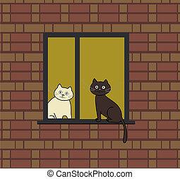 fenêtre, chats, deux