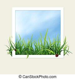 fenêtre, herbe