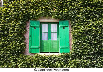 fenêtre, volets, vignes
