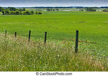 Fence Along Field