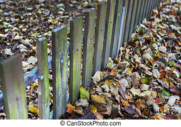 Fence and autumn leaves