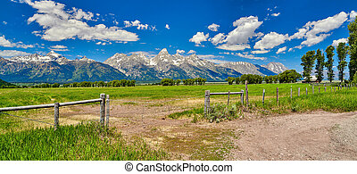 Fence and field with the Grand Teton mountians in the background.