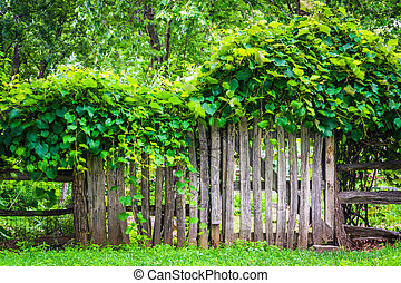 Fence and gate around a garden in Harpers Ferry, West...
