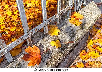fence., feuilles, baissé, coloré