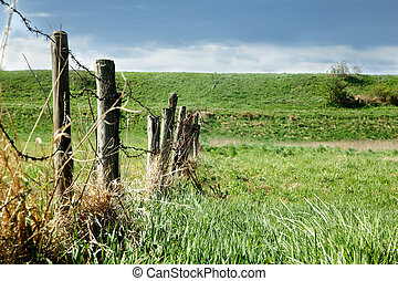 Fence in spring meadow