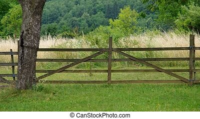 Fence in the orchard
