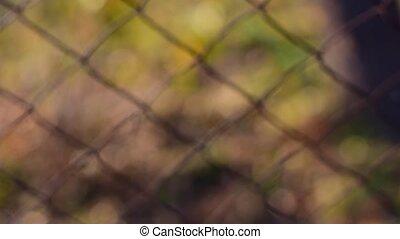 View through iron mesh.