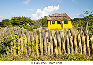 Yellow house and the fence of cactus on the island of Bonaire in the Caribbean