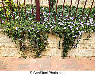 Fence of stone and bars with spring flowers in the park. Close up shot.