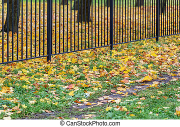 fence of the park in autumn