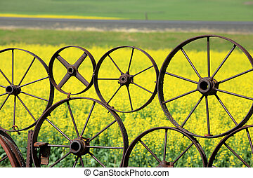 Fence of wheel rims against rapeseed farm