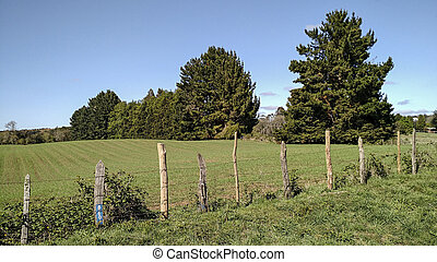 fence on the field