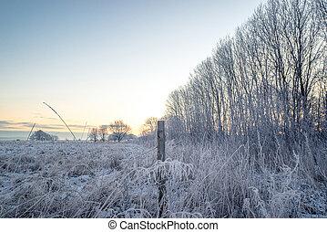 Fence post on a frosty field