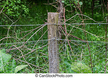 Fence Post With Chicken Wire