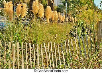 Fence posts and sea oats - A wooden fence with tall sea oats...