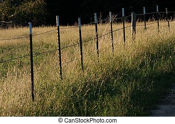 Fence Row
