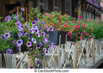 Fence with flowers on Street of Lviv city in summer