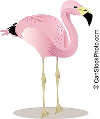 fenicottero, andino, uccello, cartone animato