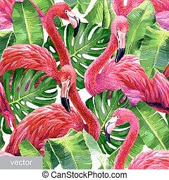 fenicottero rosa, colorito