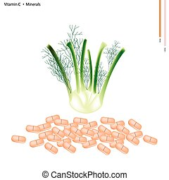 Fennel Bulb with Vitamin C and Minerals