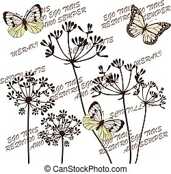 fennel flowers butterflies