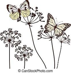fennel flowers - vector butterflies and herbs