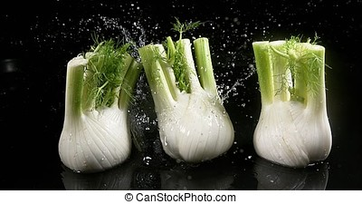 Fennel, foeniculum vulgare, Vegetable falling into Water...