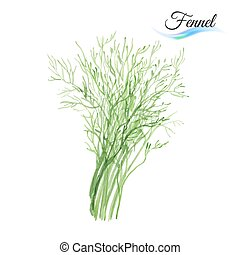 Fennel - Fresh vegetable fennel isolated on white background