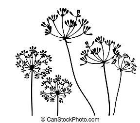 fennel - vector fennel flower