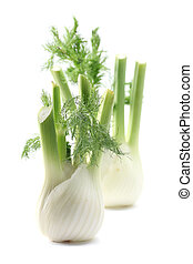 Fennel - Two fresh fennel bulbs isolated on white background