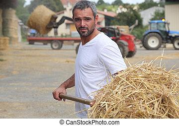 feno, agricultor, bailing