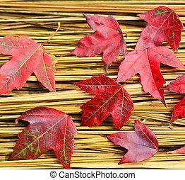 feno, folha,  Maple