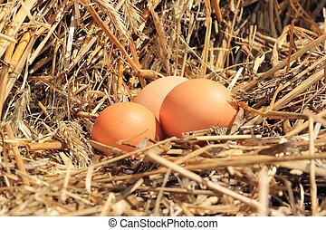 feno, ovos