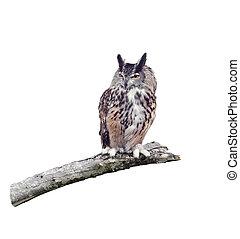 fenomenal búho con cuernos, perched, en un rama