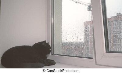 fenster., der, katz, aussehen, durch, windows, auf, der,...