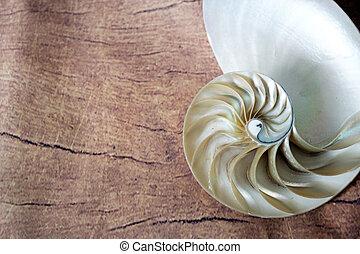 fente, séquence, fond, image, fibonacci, section, stockage, doré, (nautilus, coquille, symétrie, photo, moitié, proportion, mollusque, pompilius), structure, espace copy, spirale, perle, image, croix, nautile, photographie