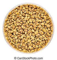 fenugreek sprouting seeds in a Petri dish
